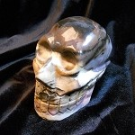 Skull - Petrified Wood